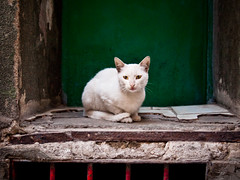 Stray Cat, Tarlaba - Istanbul (adde adesokan) Tags: cat turkey europe olympus istanbul trkei m43 mft tarlaba mirrorless microfourthirds mirrorlesscamera