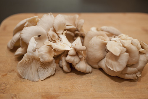 beautiful oyster mushrooms