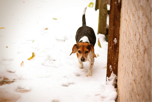 lucy-in-the-snow