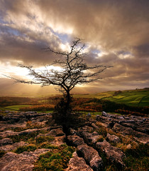 Norber (►►M J Turner Photography ◄◄) Tags: autumn sunset england tree silhouette stone pavement yorkshire limestone scar clapham yorkshiredales limestonepavement norber abigfave clapdale