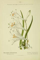 Anglų lietuvių žodynas. Žodis st.-bruno's-lily reiškia st.-bruno-lily lietuviškai.