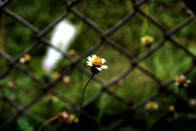 bunga dan pagar