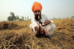 NP India burning 66 (CIAT International Center for Tropical Agriculture) Tags: india rice wheat punjab climatechange globalwarming ciat cgiar foodsecurity ccafs