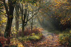 Walking in Wharfedale (rgarrigus) Tags: autumn trees england mist fall leaves misty forest landscape woods unitedkingdom path yorkshire foliage trail sentier pathway sunbeams wharfedale riverwharfe barden greatphotographers rayslight garrigus robertgarrigus robertgarrigusphotography
