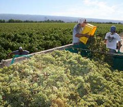 La vitivinicultura factura $14.000 millones y genera 113.000 empleos