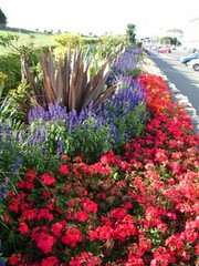 "Western Lawns Flowers • <a style=""font-size:0.8em;"" href=""http://www.flickr.com/photos/59278968@N07/6325145271/"" target=""_blank"">View on Flickr</a>"