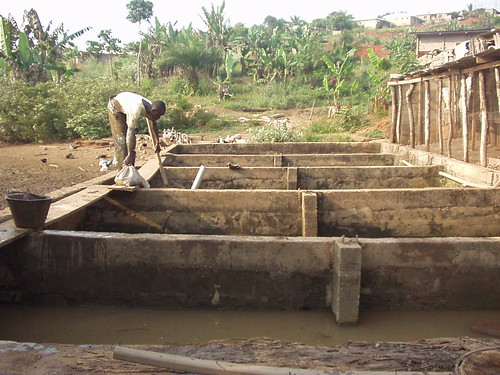 Hatchery, Cameroon. Photo by Randall Brummett, 2001