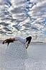De camino a las nubes.. (Sus Blanco) Tags: barcelona selfportrait clouds ballerina autoretrato nubes pointeshoes pasotraspaso