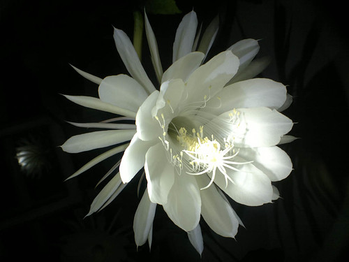 Night Flower - Nokia N8 - Wide Lens