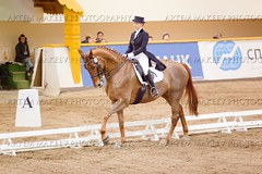 IMG_1811 (White Bear) Tags: horses horse cup russia president artem dressage bitsa      makeev