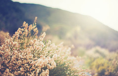 Happy Thanksgiving! (isayx3) Tags: california thanksgiving morning flowers autumn sun flower green fal
