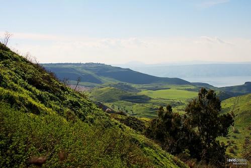 Golan on 2012-03-25 - DSC_8000.jpg