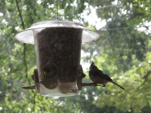 Birds 0322