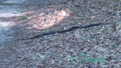 snakeontrail