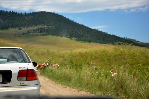 montana july 2011_1898