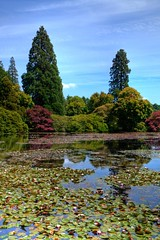 Water Lilies (There and back again) Tags: lake waterlilies nationaltrust hdr sheffieldpark mygearandme