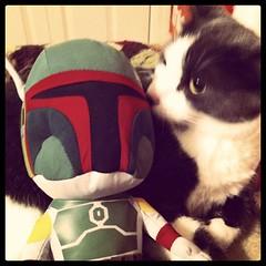 6-15-11 (mkrumm1023) Tags: cat kitty bobafett