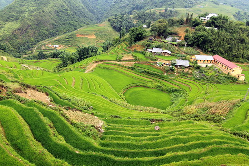 IMG_9144, Terraced paddy fields