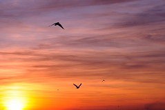 sunset_DSC_2280_2_web (collinro2) Tags: sunset sky birds tamron 90mm f28 sognidreams