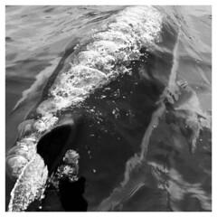 Bubbles (simonabradley) Tags: ireland seagulls fish elephant dogs nature birds fauna underwater donkeys wildlife kittens deer clownfish goats dolphins seals monkeys camels marmots simagineering simonabradley
