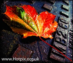 iPod Shuffle2 - Sweet Leaf (Hotpix [LRPS] Hanx for 1.5M Views) Tags: uk autumn red england orange fallleaves sun sunlight fall wet water leaves metal shower grid leaf rust bravo iron bright steel smith tony autumnleaves showers leafs hdr drizzle soaked hotpix tonysmith tonysmithhotpix