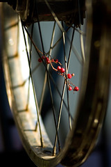 Bike Wheel California (Victor Barajas Photography) Tags: color cycling fineartphotography fixedgearbikes redbikes urbancycling cubaphotographs bicyclephotographs cubabikephotographs