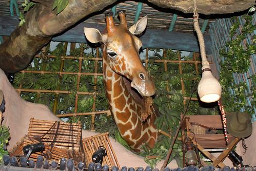 Le Girafe Curieuse