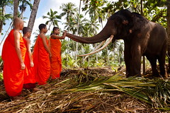 Friendly... (Bhagis Photography) Tags: buddhist young monk lanka srilanka vihara kande aluthgama