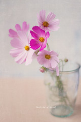 pink flower soft pastel rip stevejobs tribute stayhungry... (Photo: ǝıqqǝp on Flickr)