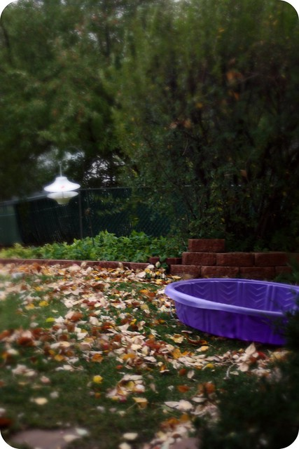 pool and leaves