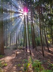 Mastbosch (expatwelsh) Tags: trees sun canon woods lensflare handheld backlit breda bos zon brabant hdr mastbos photomatix mastbosch g10 3exp cs5 topazadjust topazdenoise