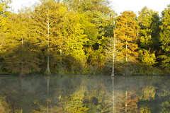 Reflection (kevin33040) Tags: county lake color reflection fall pond tn tennessee bolivar hardeman