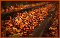 ~Forever Autumn~ (Eddie The Bugman) Tags: nottingham autumn brown cold leaves steps windy overprocessed embankment waroftheworlds rivertrent jeffwayne brrrrrrrrr canon50mmf18ii canoneos5dmkii foreverautunn
