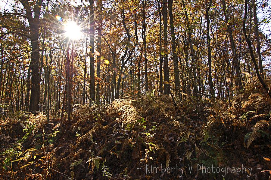 More October sunburst