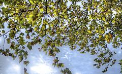 (Ark-Angel114) Tags: blue autumn trees brown fall leaves yellow digital photoshop dark season photography grey leaf high nikon university frost skies hand dynamic state surreal iowa handheld held isu leafs range hdr lightroom cs3 cs5 d3100