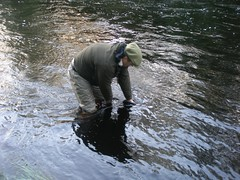 Catch and release (thomvb) Tags: fishing salmon stinchar knockdolian