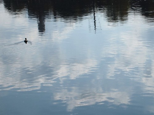 duck + reflections