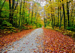 Crunch - Vermont (Sean O'Gara Photography - OGara Images) Tags: road street new travel autumn trees red england orange fall nature leaves yellow america forest season landscape photography vermont path walk united down sean fallen states stroll crunch ogara