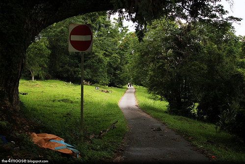 Bukit Brown Cemetery - Outer Ring Path