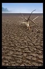 Driftwood Trapped in Mud (Ted Glazer: Vertical Nature Photography) Tags: mud driftwood delaware dried natureplus gordonspond delawarenationalseashore tedglazer verticalnature