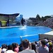 Sea World with SYR - 041
