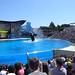 Sea World with SYR - 047