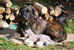 Dans son ermitage, l'homme avait un chien ... (Le pot-ager) Tags: chien cabot toutou clebs montagnedelure notredamedelure