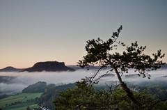 (Marcus Pink) Tags: sun tree fog clouds landscape nebel wolken landschaft sonne baum bastei lilienstein schsischeschweiz canon1740f4lusm