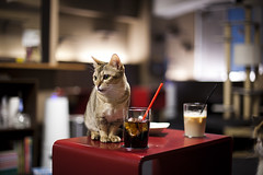 Thirsty Cat (element_photography) Tags: cats japan cat canon 50mm tokyo crazy cafe shinjuku mark kittens ii calico 5d