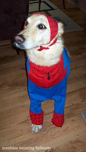 Spider-Ben!