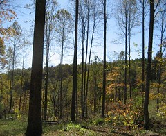 Mixed hardwood stand five months after harvest completion (October 2009).