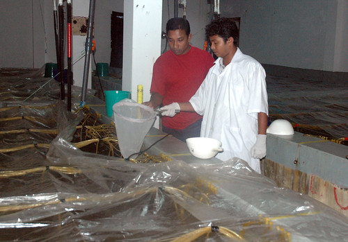 Hatchery, Bangladesh. Photo by WorldFish, 2008