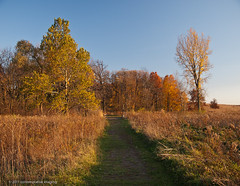 a pleasant path (contemplative imaging) Tags: blue autumn trees sky usa color fall nature colors digital rural america landscape photography golden evening countryside photo illinois october midwest day skies natural image photos path district country sunday conservation images il clear trail ill american walkway valley hour area imaging prairie pleasant 1185 midwestern 2011 mchenrycounty 85x11 olye3 contemplativeimaging qpdcpl olyhg1454 ronzack 20111029 plv20111029