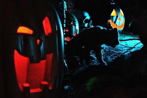 Graveyard cat and pumpkins